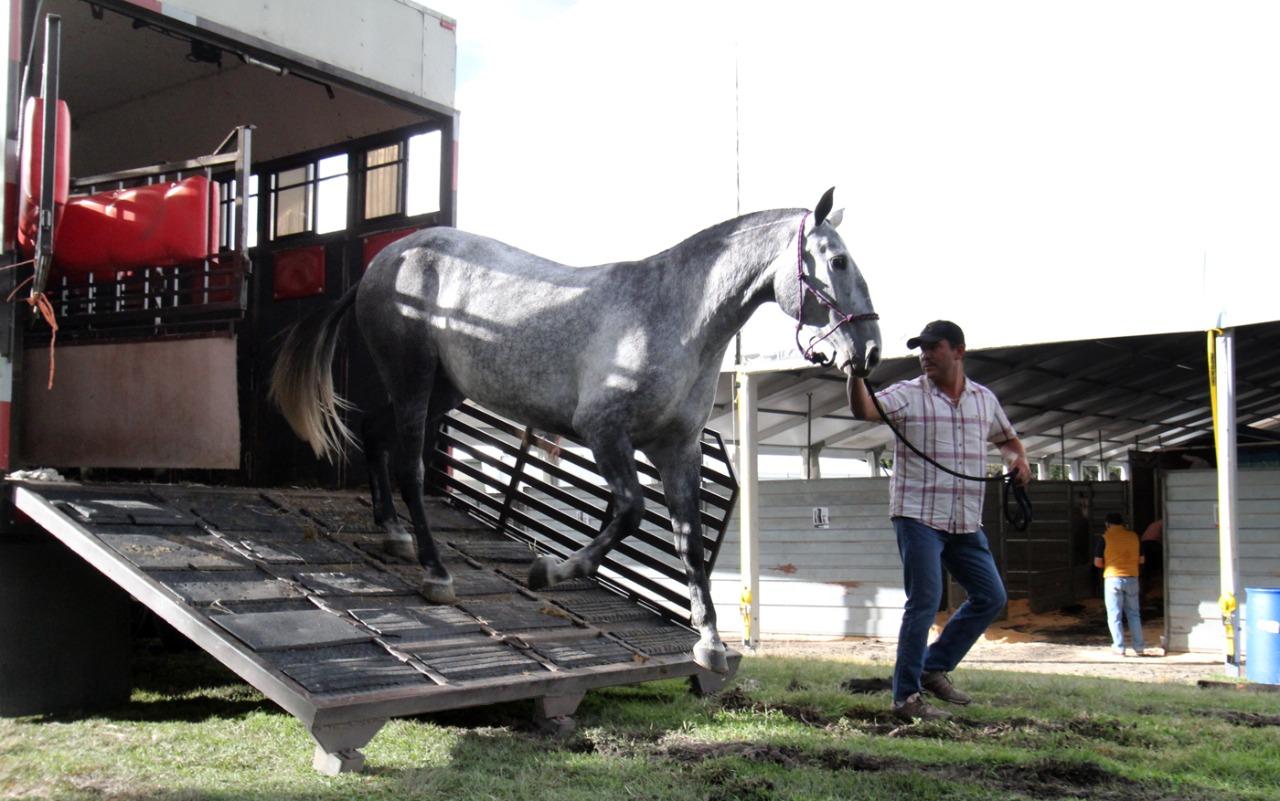 Inauguración Festival Internacional Caballo Lusitano