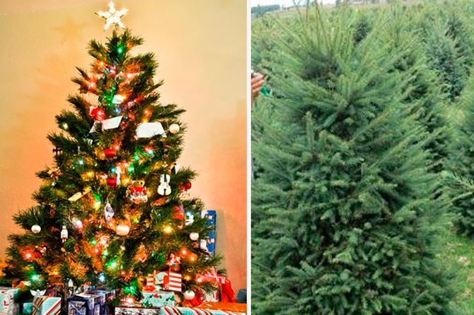 arbol de navidad natural o artificial