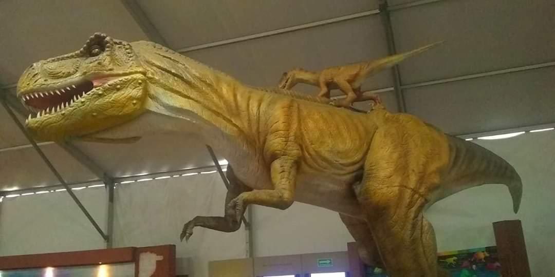 Inauguran exposición gigantes del desierto en Toluca