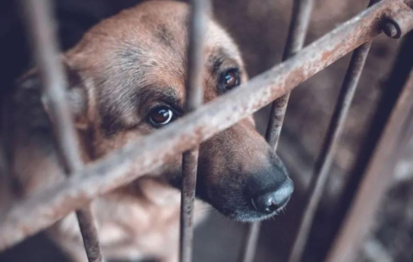 Prisión preventiva por maltrato animal en CDMX