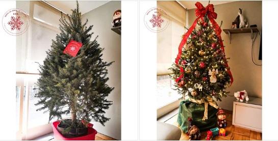 Renta un árbol de navidad en Toluca
