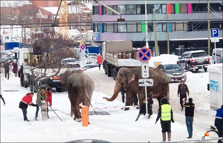 Elefantes escapan del circo para jugar en la nieve