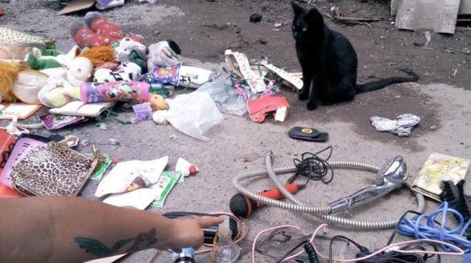 gatito vende chacharas en tianguis