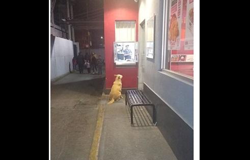 """Historia del """"güero"""", un perrito que cena todos los días en un KFC de EdoMéx"""