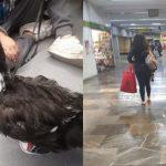 Pato con tenis causa sensacion en metro de la CDMX