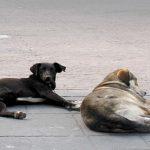 Dos perros le salvan la vida a hombre en asalto