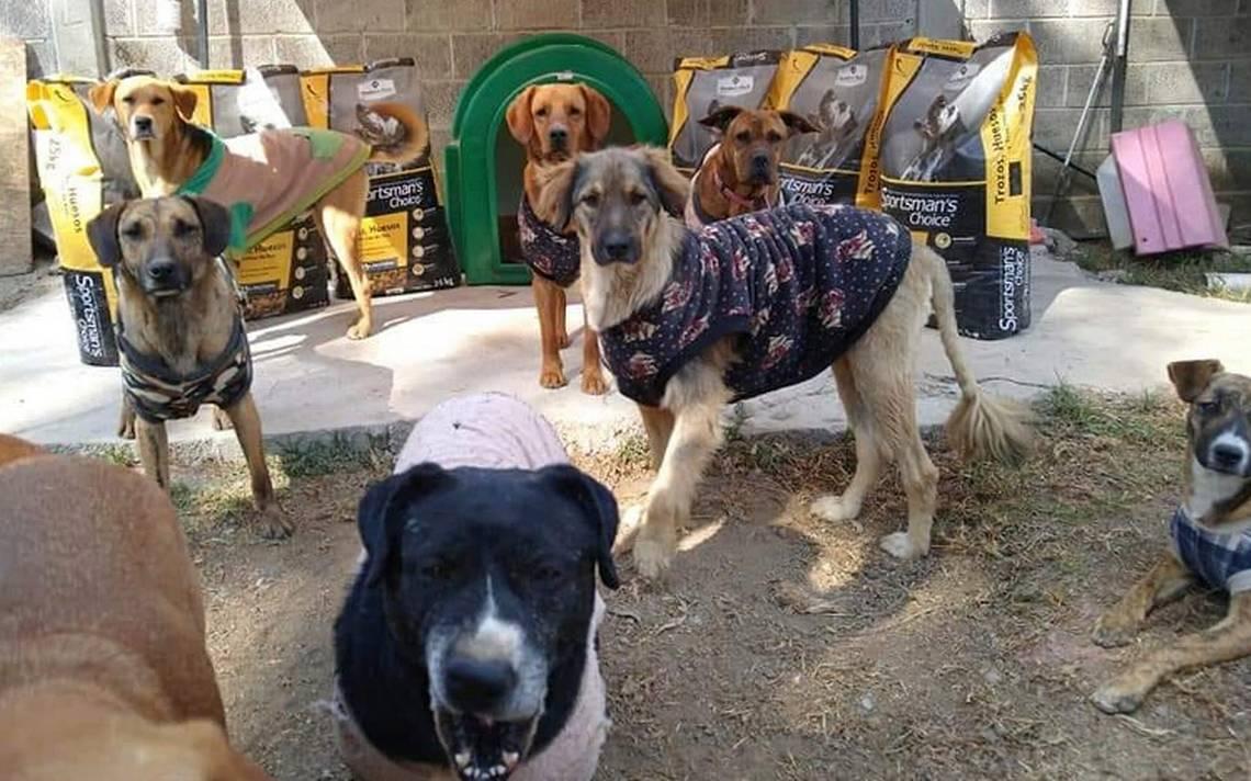 provocan incendio en refugio para perros