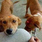 Toluca invita a adoptar perros y gatos rescatados de las calles de la ciudad