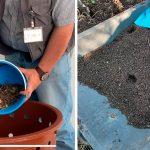 Cursos en línea sobre composta y manejo de residuos en Toluca