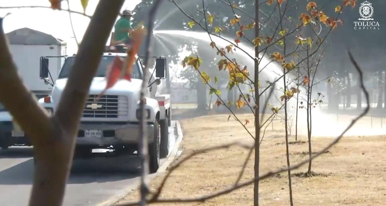 """Toluca recibe reconocimiento internacional """"2019 Tree City"""""""