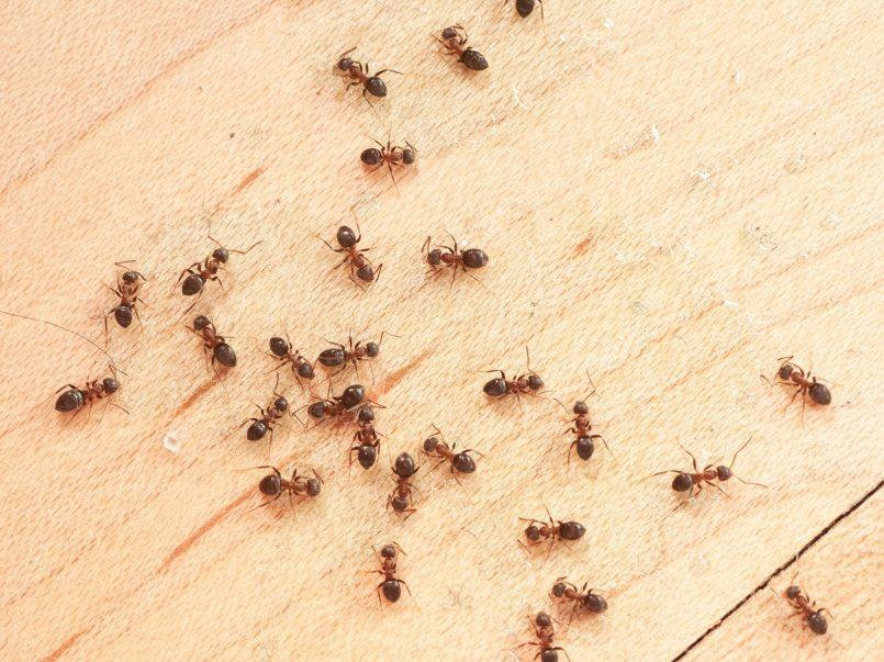 estos-son-los-insectos-mas-peligrosos-de-la-tierra