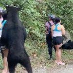 trasladan-al-zoologico-a-oso-que-abrazo-a-una-mujer-en-nuevo-leon