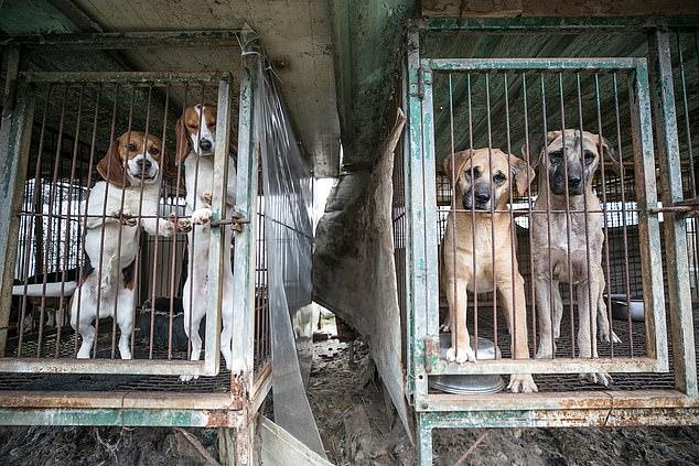 Corea del Norte sacrificará perros debido a falta de alimentos