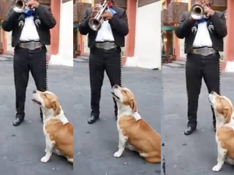 Perrito-canta-con-mariachi-cancion-de-Joan-Sebastian