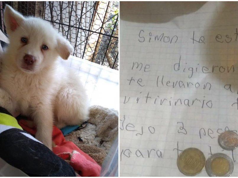 Hace unos meses conocimos la historia de Simón, un perrito al que su pequeño dueño dejó encargado en un albergue con solo tres pesitos.