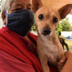 Consulta-todos-los-puestos-de-vacunacion-antirrabica-para-perros-y-gatos-en-Toluca
