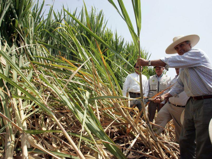 """Gobierno Mexicano acusado de """"satanizar"""" el azúcar"""