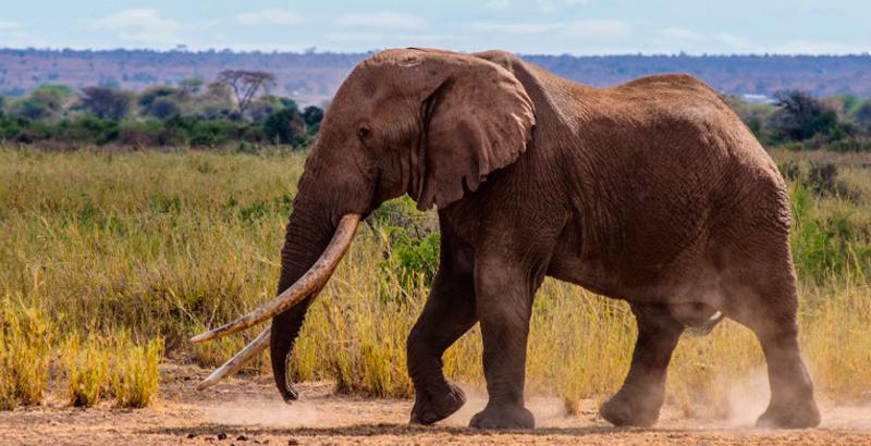 Aparecen más de 300 elefantes muertos en el sur de África