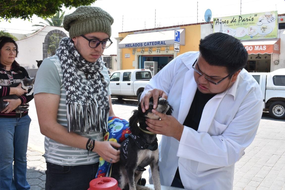 donde-estaran-los-puestos-de-vacunacion-para-perros-y-gatos-en-edomex2