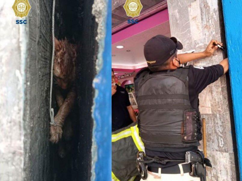 (Video) Gatita es rescatada de entre dos paredes