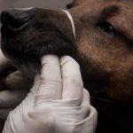 Grupo de personas lucran con vacunas antirrábicas y terminan mandando a las mascotas al hospital en Naucalpan y Nezahuacoyotl.