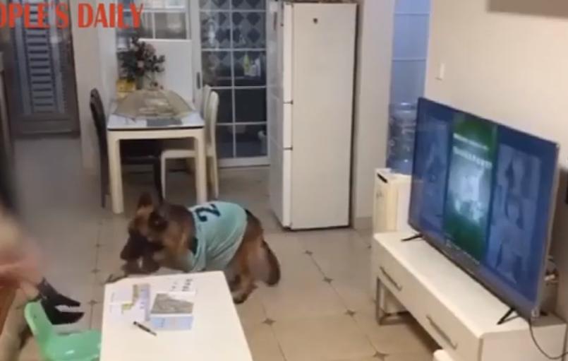 (Video) Perro alerta a niña que viene su papá para que deje la TV y haga su tarea