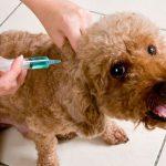 La Jornada Nacional de Vacunación de perros y gatos ya está próxima, consulta aquí los más de 2 mil 472 puestos en todo el Edomex.