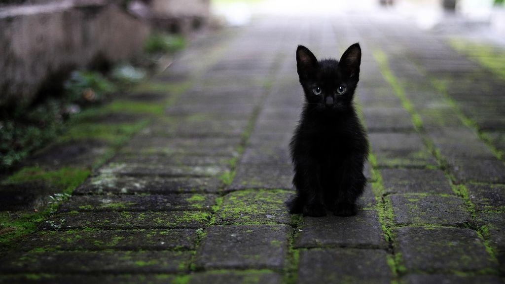 piden-no-dar-en-adopcion-a-perros-y-gatos-en-octubre-por-rituales2