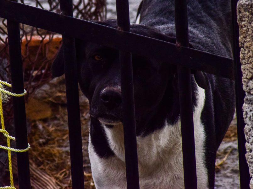policias-podran-irrumpir-en-casa-si-hay-reportes-de-animales-maltratados-en-cdmx2