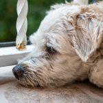 que-hacer-para-ayudar-a-mi-mascota-durante-el-ruido-de-la-pirotecnia2