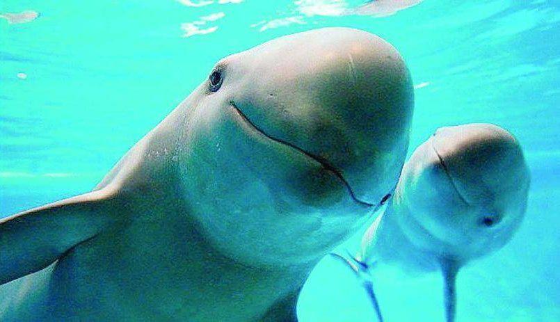 Prohíben pesca con red para proteger a la vaquita marina