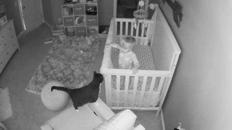 Captan el espeluznante momento en que un gato habla con un niño    VIDEO