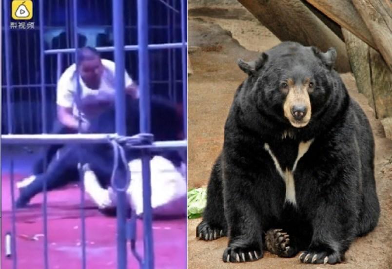 Oso ataca a domador en circo en China porque no le dieron comida