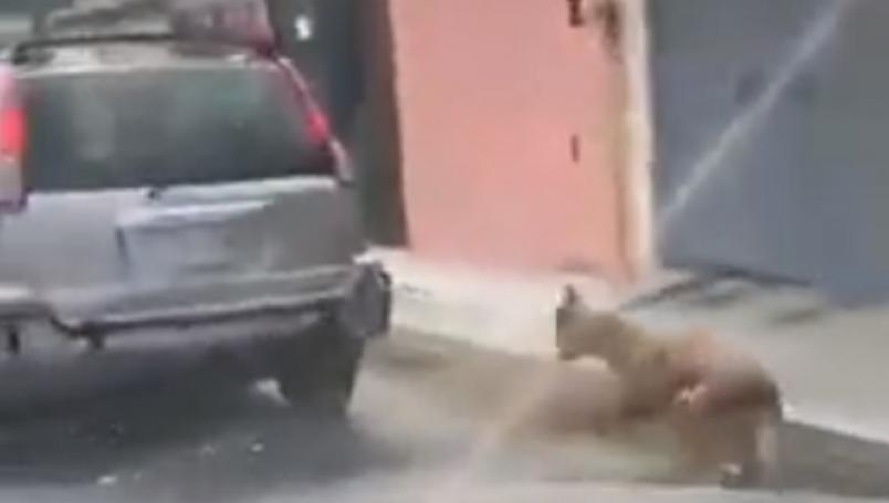 Perro es arrastrado luego de haberlo amarrado a una camioneta VIDEO