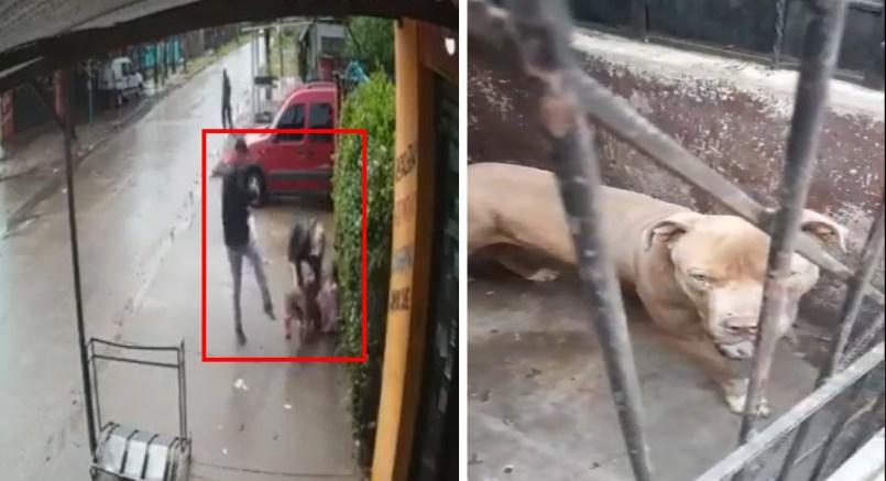 Pitbull ataca a niña, adultos no pueden detener el percance    VIDEO