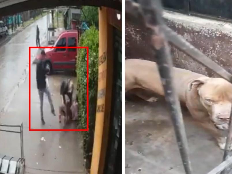 Pitbull ataca a niña, adultos no pueden detener el percance || VIDEO