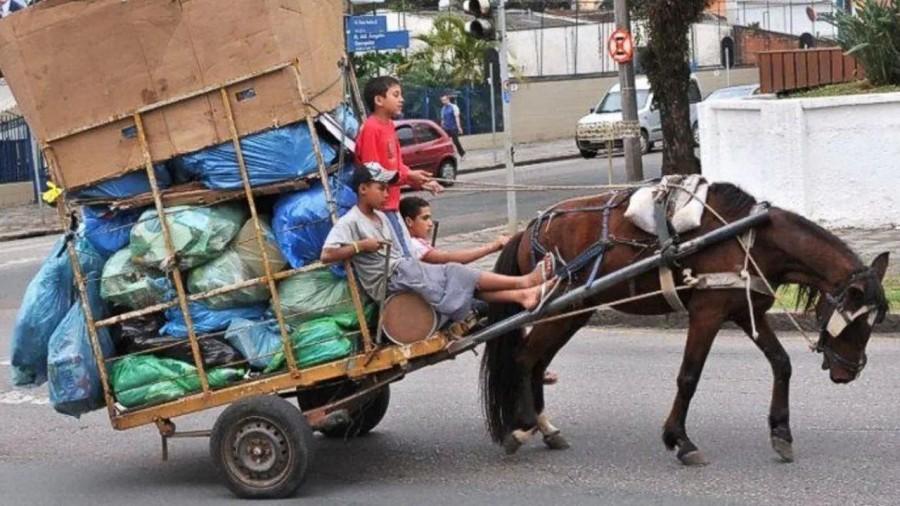 animales-carga-edomex