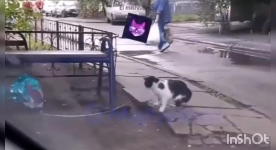 """(Video) Gato enamorado encuentra globo y se lo da a su """"pareja"""""""