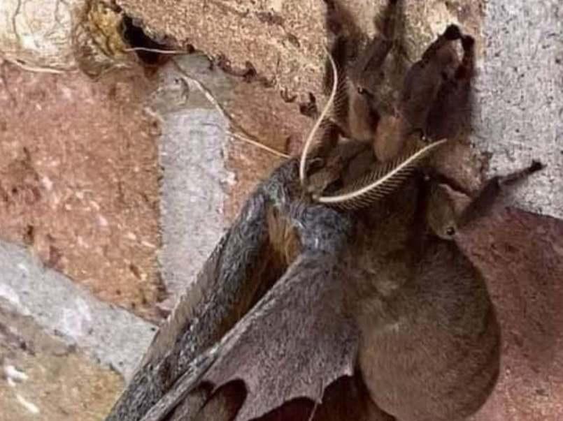 """Internautas causan temor por supuestas """"tarántulas con alas"""" en EU"""