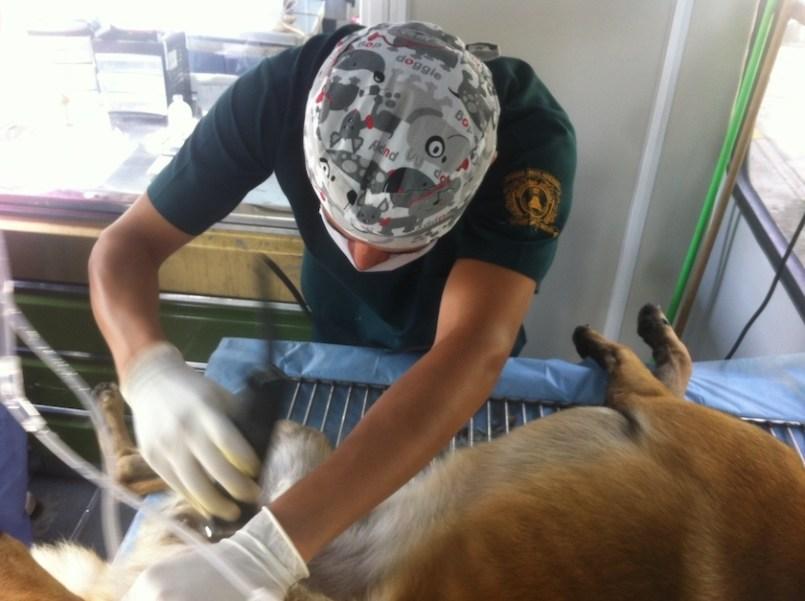 uaemex-esteriliza-a-tus-perros-y-gatos-gratis
