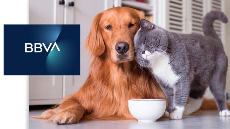 BBVA-ofrece-seguro-de-vida-digital-para-mascotas