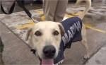 la-marina-decide-adoptar-al-perrito-rescatado-en-tabasco
