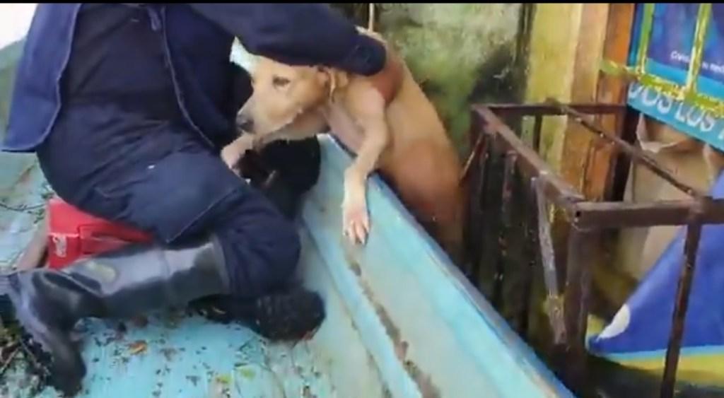 marina-rescata-a-perrito-en-tabasco