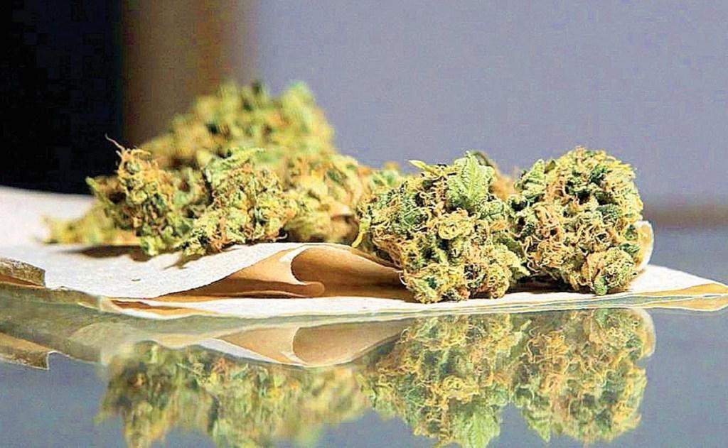 nuevo-dictamen-marihuana