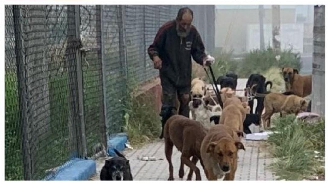 Perritos callejeros son envenados con comida donada en albergue de Jalisco