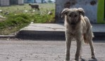 seis-años-prison-por-abandono-de-mascotas