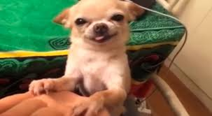 unam-investigacion-revela-que-perritos-pueden-sonreir2