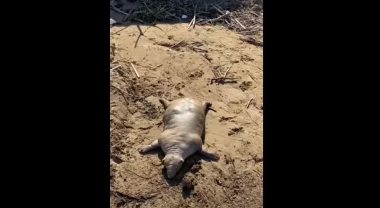 (Video) Extraña criatura aparece después de las inundaciones en Grecia