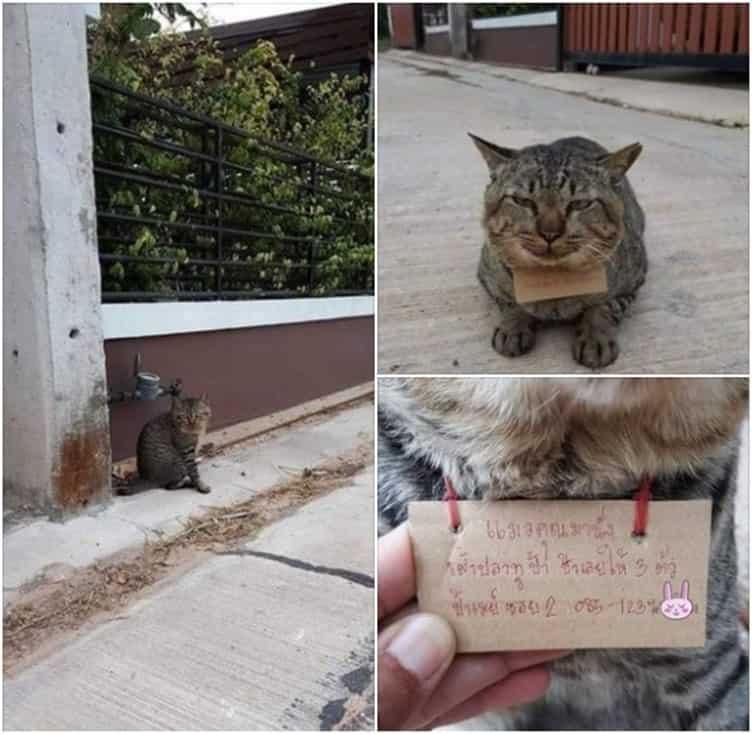 viral-gatito-desaparece-por-varios-dias-y-vuelve-endeudado