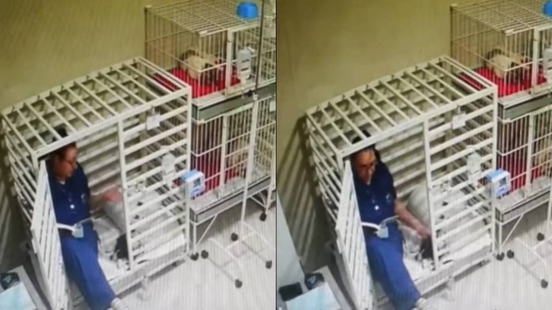 Captan-a-veterinaria-leyendole-un-cuento-a-un-perrito